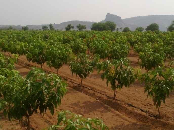 Hindavi Agri Tech Sangareddy